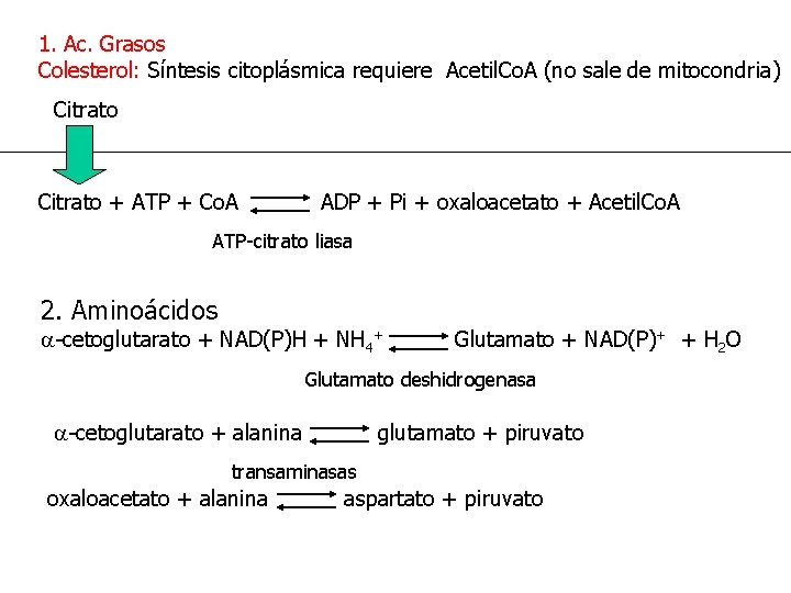 1. Ac. Grasos Colesterol: Síntesis citoplásmica requiere Acetil. Co. A (no sale de mitocondria)