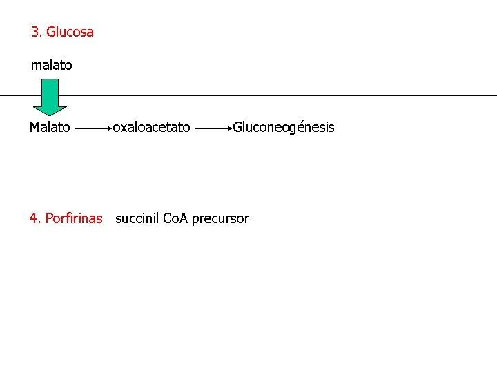 3. Glucosa malato Malato oxaloacetato Gluconeogénesis 4. Porfirinas succinil Co. A precursor