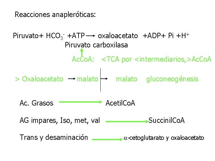 Reacciones anapleróticas: Piruvato+ HCO 3 - +ATP oxaloacetato +ADP+ Pi +H+ Piruvato carboxilasa Ac.