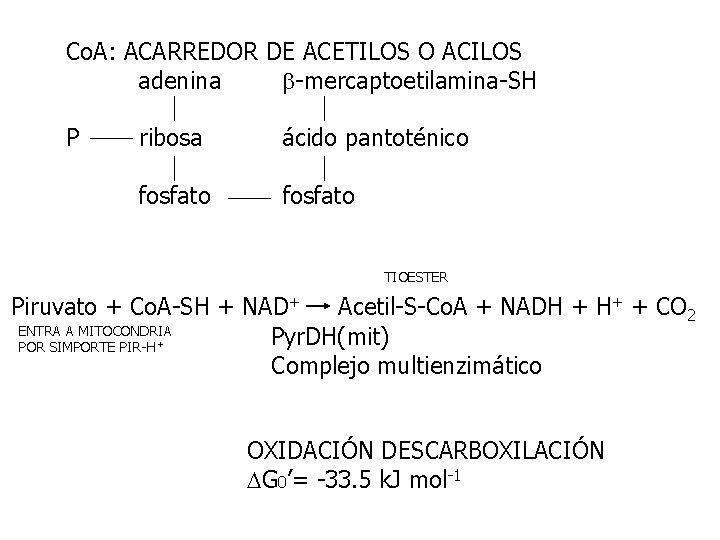 Co. A: ACARREDOR DE ACETILOS O ACILOS adenina -mercaptoetilamina-SH P ribosa ácido pantoténico fosfato