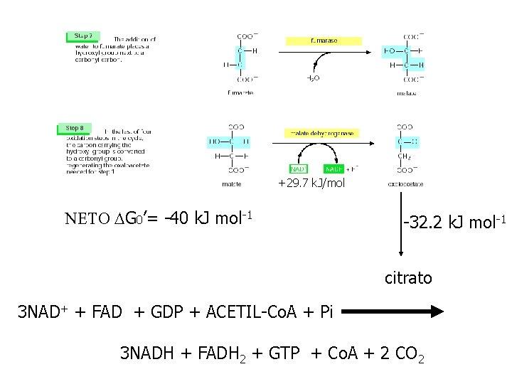 +29. 7 k. J/mol NETO DG 0'= -40 k. J mol-1 -32. 2 k.