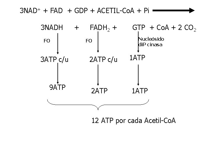 3 NAD+ + FAD + GDP + ACETIL-Co. A + Pi 3 NADH FO