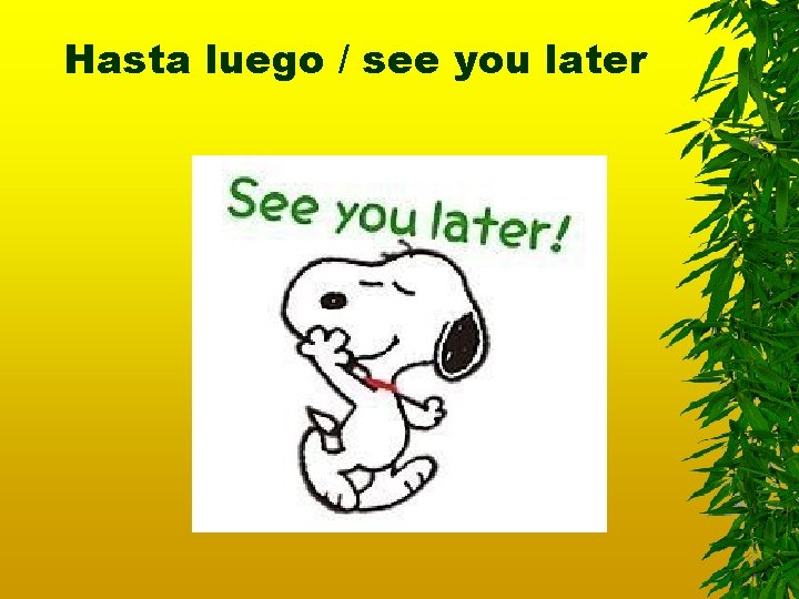 Hasta luego / see you later