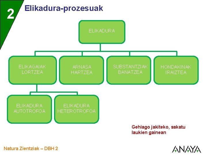 2 Elikadura-prozesuak ELIKADURA ELIKAGAIAK LORTZEA ELIKADURA AUTOTROFOA ARNASA HARTZEA SUBSTANTZIAK BANATZEA HONDAKINAK IRAIZTEA ELIKADURA