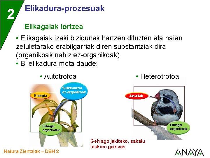 2 Elikadura-prozesuak Elikagaiak lortzea • Elikagaiak izaki bizidunek hartzen dituzten eta haien zeluletarako erabilgarriak
