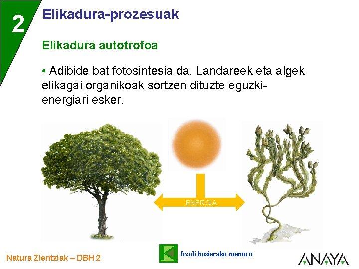 2 Elikadura-prozesuak Elikadura autotrofoa • Adibide bat fotosintesia da. Landareek eta algek elikagai organikoak