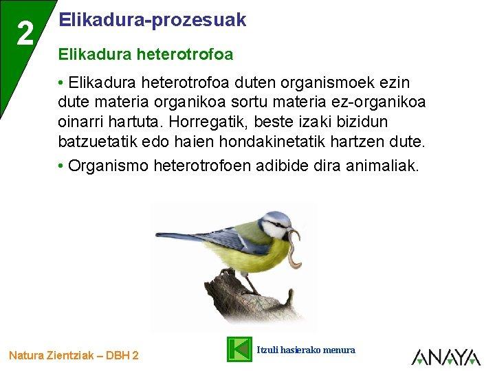 2 Elikadura-prozesuak Elikadura heterotrofoa • Elikadura heterotrofoa duten organismoek ezin dute materia organikoa sortu