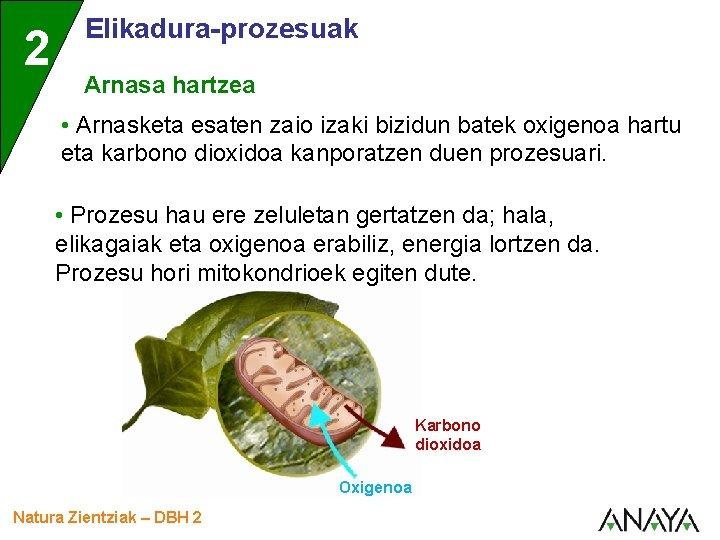 2 Elikadura-prozesuak Arnasa hartzea • Arnasketa esaten zaio izaki bizidun batek oxigenoa hartu eta