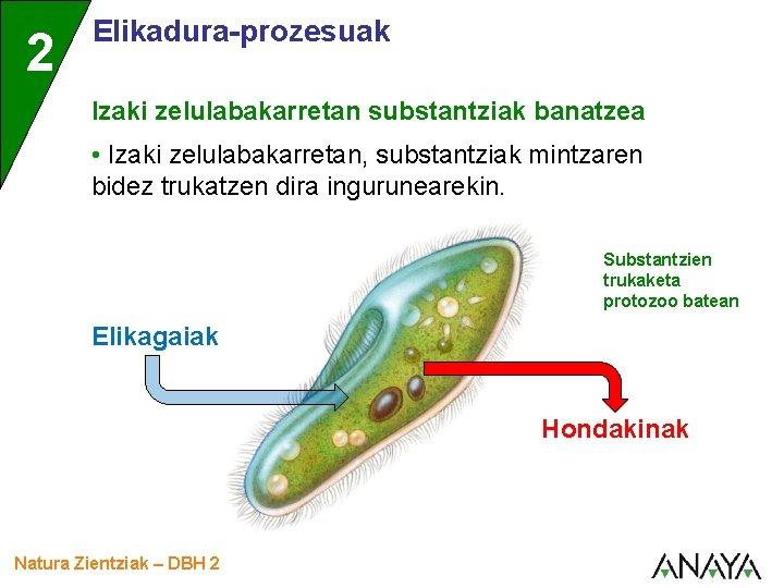 2 Elikadura-prozesuak Izaki zelulabakarretan substantziak banatzea • Izaki zelulabakarretan, substantziak mintzaren bidez trukatzen dira