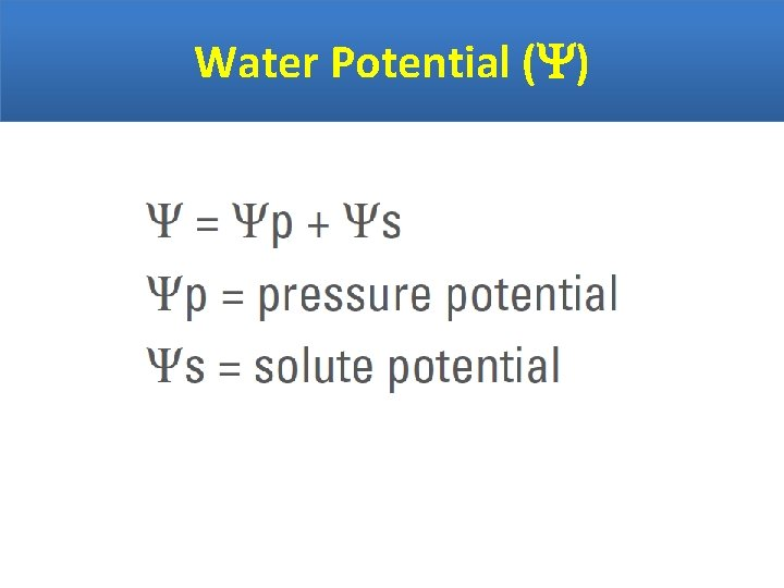 Water Potential ( )