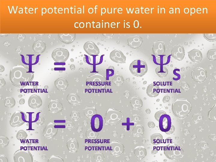Water potential of pure water in an open container is 0.