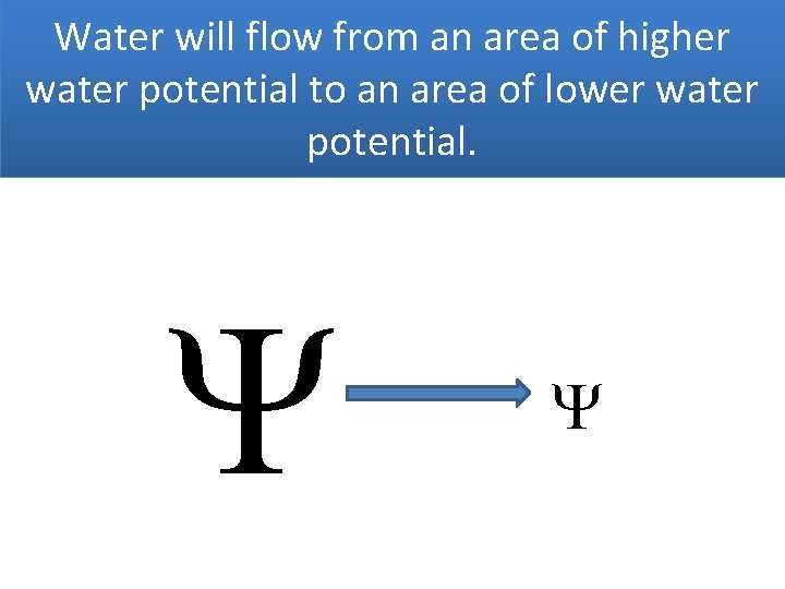 Water will flow from an area of higher water potential to an area of