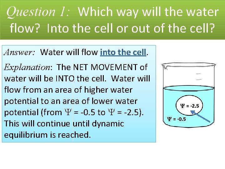 Question 1: Which way will the water flow? Into the cell or out of