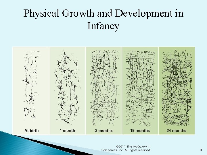 Physical Growth and Development in Infancy © 2011 The Mc. Graw-Hill Companies, Inc. All