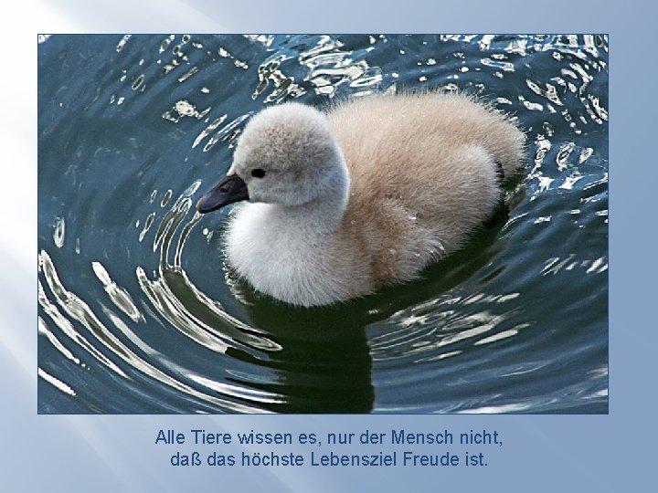 Alle Tiere wissen es, nur der Mensch nicht, daß das höchste Lebensziel Freude ist.