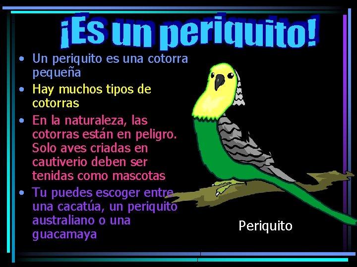 • Un periquito es una cotorra pequeña • Hay muchos tipos de cotorras
