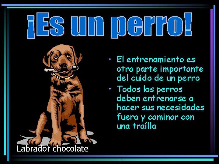 • El entrenamiento es otra parte importante del cuido de un perro •