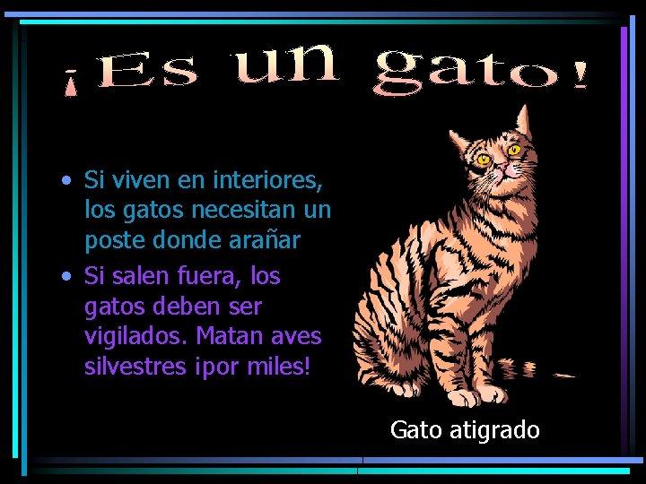 • Si viven en interiores, los gatos necesitan un poste donde arañar •