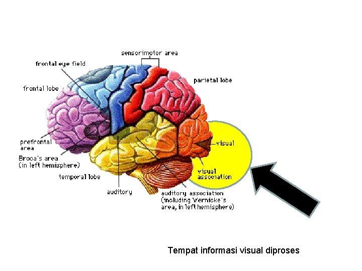 Tempat informasi visual diproses