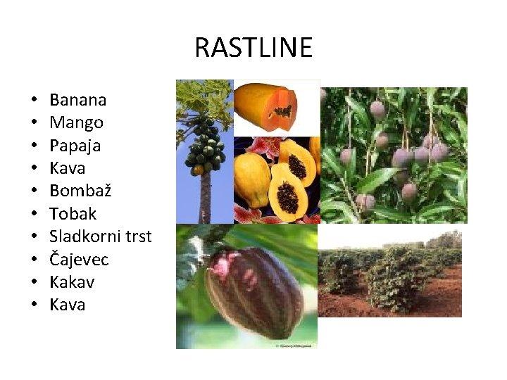 RASTLINE • • • Banana Mango Papaja Kava Bombaž Tobak Sladkorni trst Čajevec Kakav