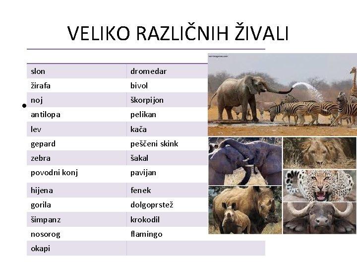 VELIKO RAZLIČNIH ŽIVALI slon dromedar žirafa bivol noj škorpijon • antilopa pelikan lev kača