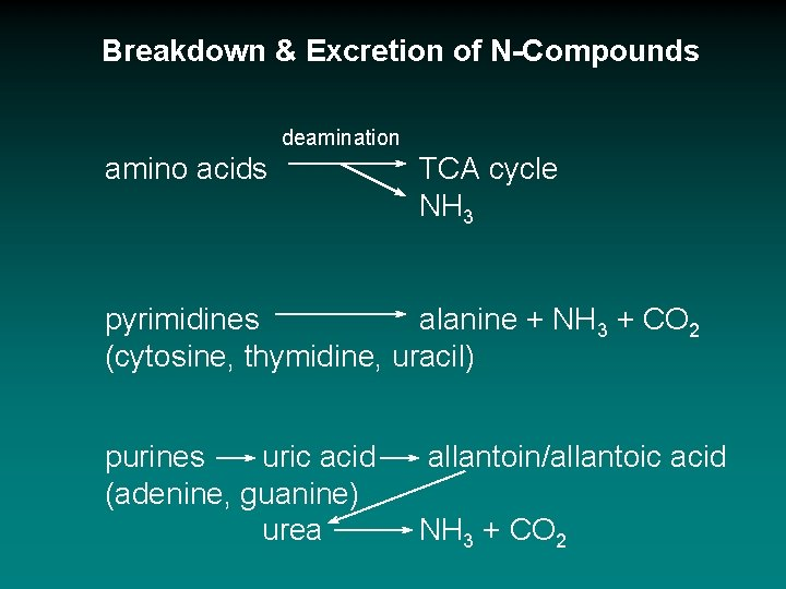 Breakdown & Excretion of N-Compounds deamination amino acids TCA cycle NH 3 pyrimidines alanine