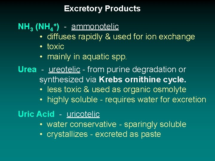 Excretory Products NH 3 (NH 4+) - ammonotelic • diffuses rapidly & used for