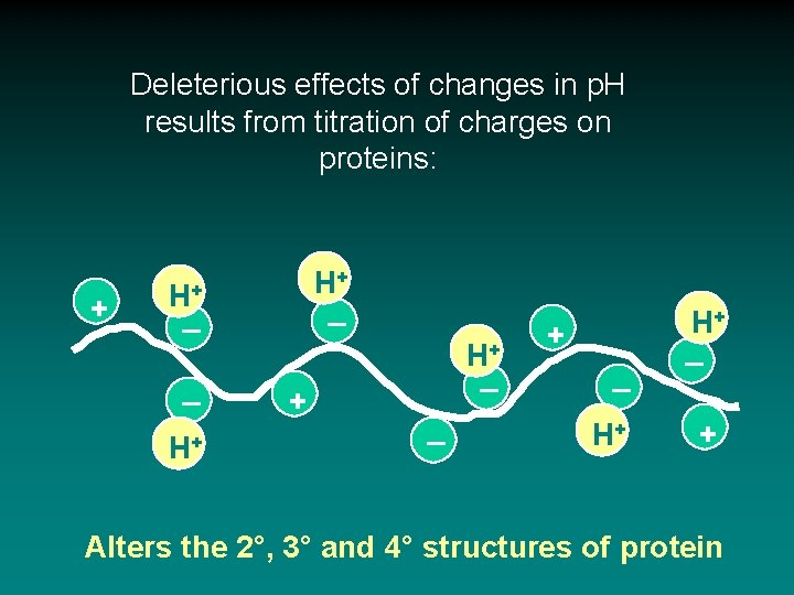 Deleterious effects of changes in p. H results from titration of charges on proteins: