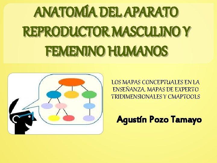 ANATOMÍA DEL APARATO REPRODUCTOR MASCULINO Y FEMENINO HUMANOS LOS MAPAS CONCEPTUALES EN LA ENSEÑANZA.