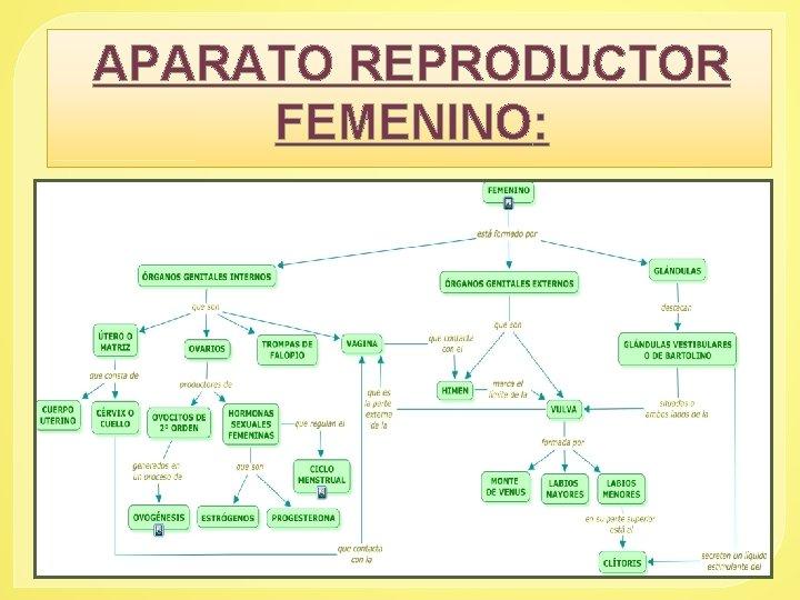 APARATO REPRODUCTOR FEMENINO: