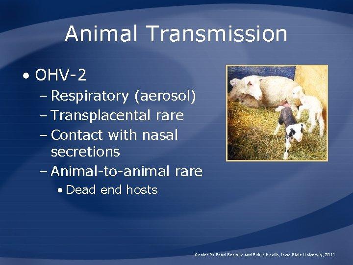 Animal Transmission • OHV-2 – Respiratory (aerosol) – Transplacental rare – Contact with nasal