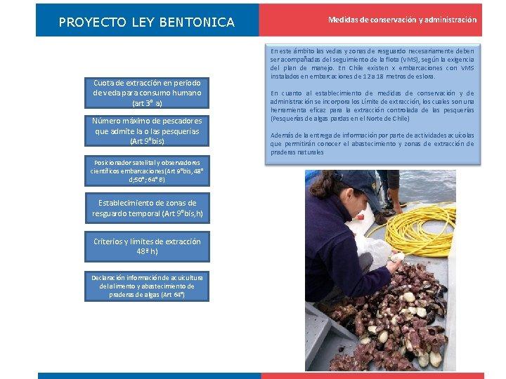 PROYECTO LEY BENTONICA Cuota de extracción en periodo de veda para consumo humano (art