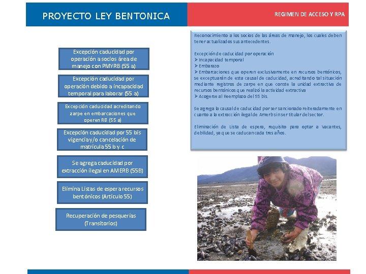 PROYECTO LEY BENTONICA REGIMEN DE ACCESO Y RPA Registro Pesquero Artesanal Reconocimiento a los