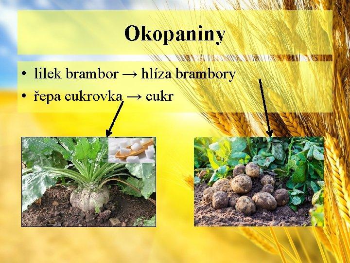 Okopaniny • lilek brambor → hlíza brambory • řepa cukrovka → cukr