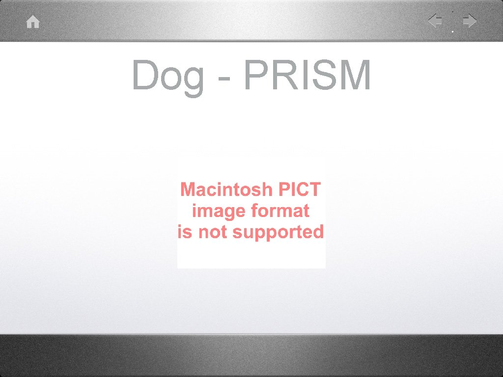 Dog - PRISM