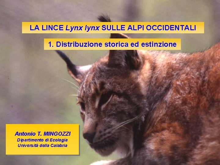 LA LINCE Lynx lynx SULLE ALPI OCCIDENTALI 1. Distribuzione storica ed estinzione Antonio T.