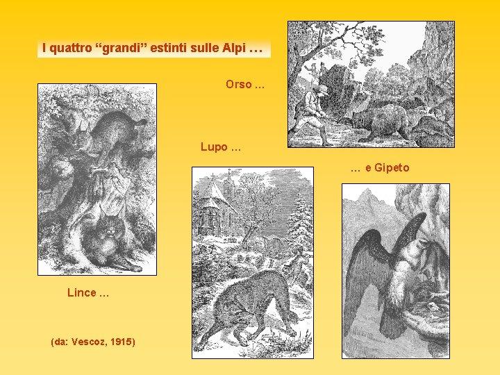 """I quattro """"grandi"""" estinti sulle Alpi … Orso … Lupo … … e Gipeto"""