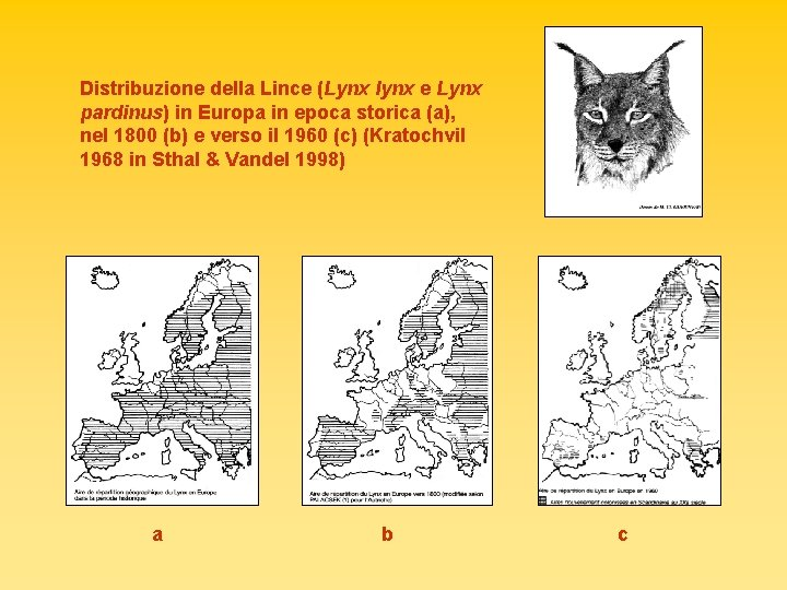 Distribuzione della Lince (Lynx lynx e Lynx pardinus) in Europa in epoca storica (a),