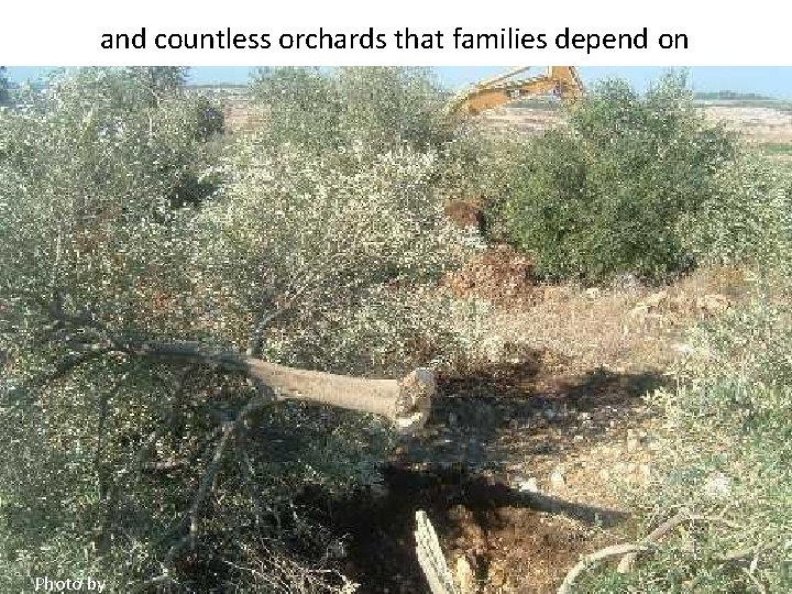 and countless orchards that families depend on Photo by