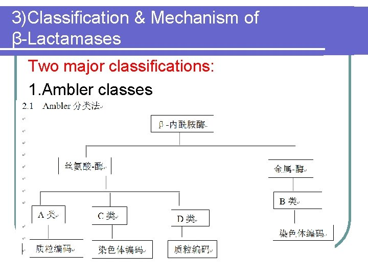 3)Classification & Mechanism of β-Lactamases Two major classifications: 1. Ambler classes