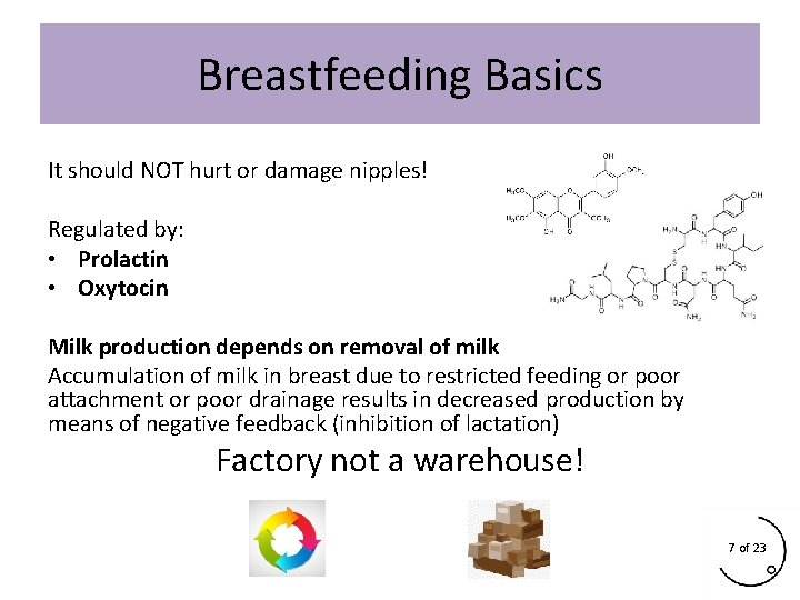 Breastfeeding Basics It should NOT hurt or damage nipples! Regulated by: • Prolactin •