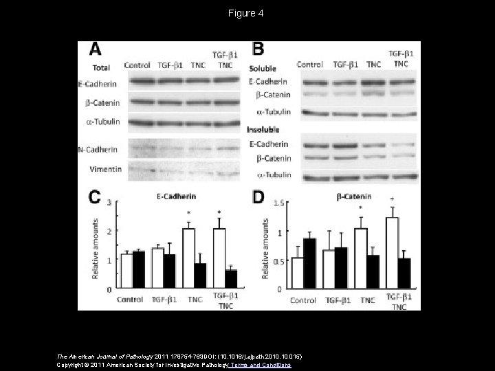 Figure 4 The American Journal of Pathology 2011 178754 -763 DOI: (10. 1016/j. ajpath.