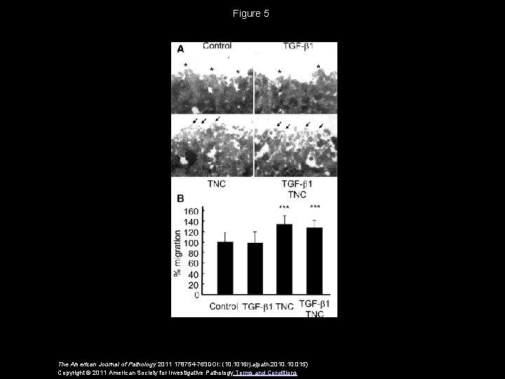 Figure 5 The American Journal of Pathology 2011 178754 -763 DOI: (10. 1016/j. ajpath.