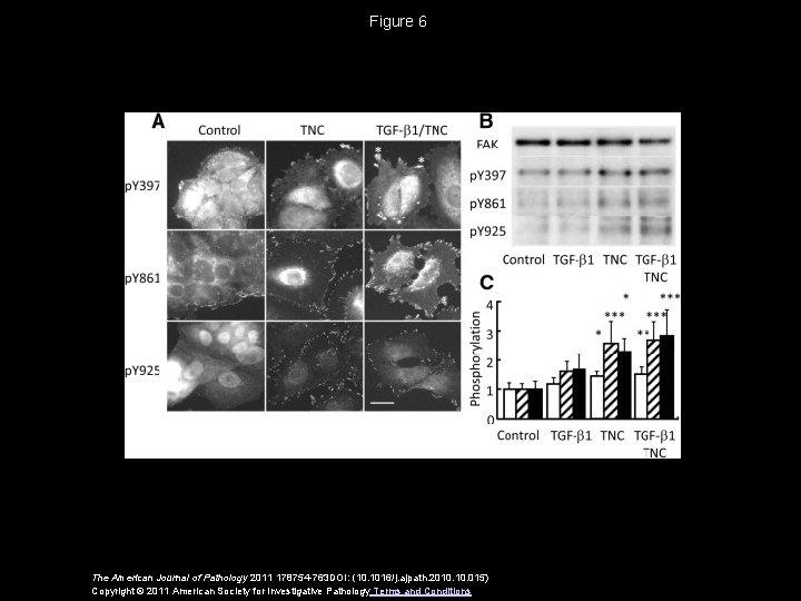 Figure 6 The American Journal of Pathology 2011 178754 -763 DOI: (10. 1016/j. ajpath.