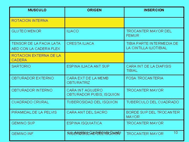 MUSCULO ORIGEN INSERCION ROTACION INTERNA GLUTEO MENOR ILIACO TROCANTER MAYOR DEL FEMUR TENSOR DE