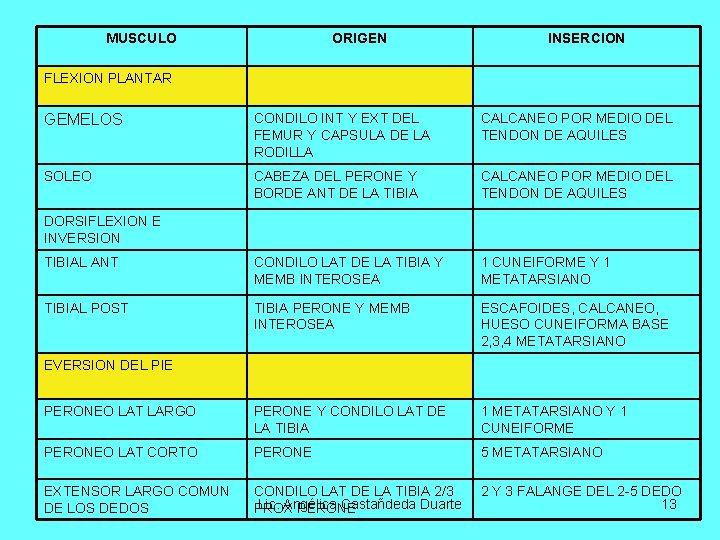 MUSCULO ORIGEN INSERCION FLEXION PLANTAR GEMELOS CONDILO INT Y EXT DEL FEMUR Y CAPSULA