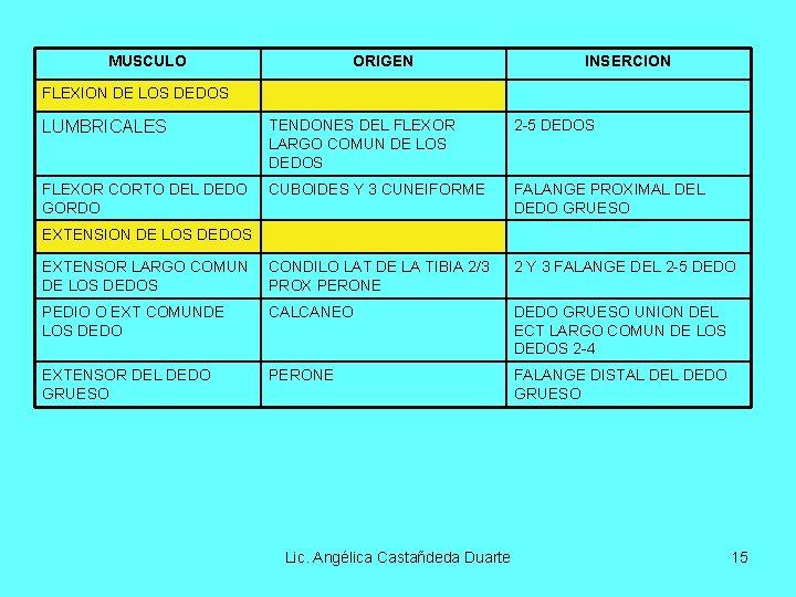 MUSCULO ORIGEN INSERCION FLEXION DE LOS DEDOS LUMBRICALES TENDONES DEL FLEXOR LARGO COMUN DE