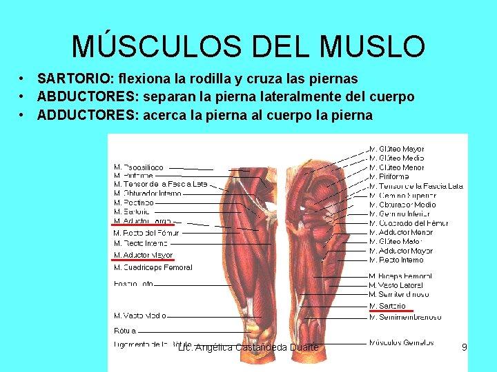MÚSCULOS DEL MUSLO • SARTORIO: flexiona la rodilla y cruza las piernas • ABDUCTORES:
