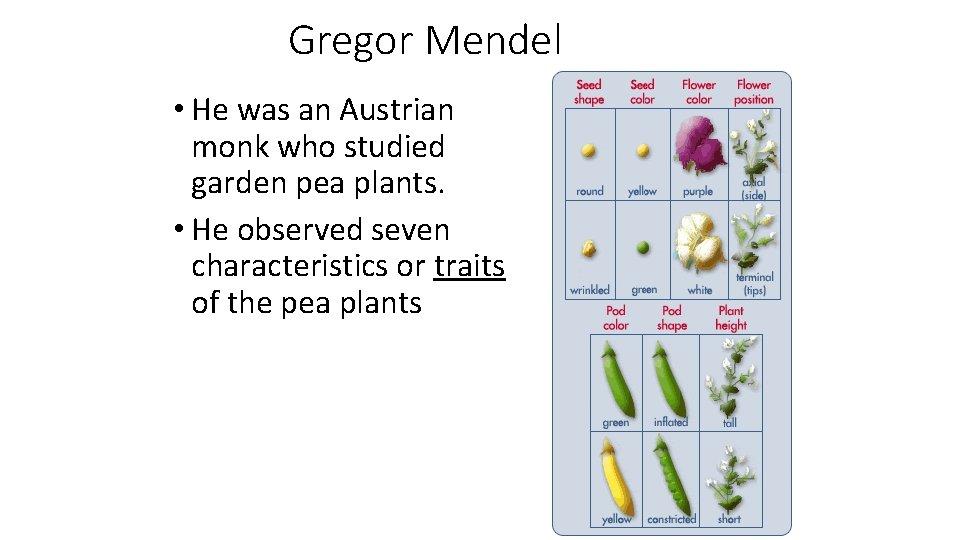 Gregor Mendel • He was an Austrian monk who studied garden pea plants. •
