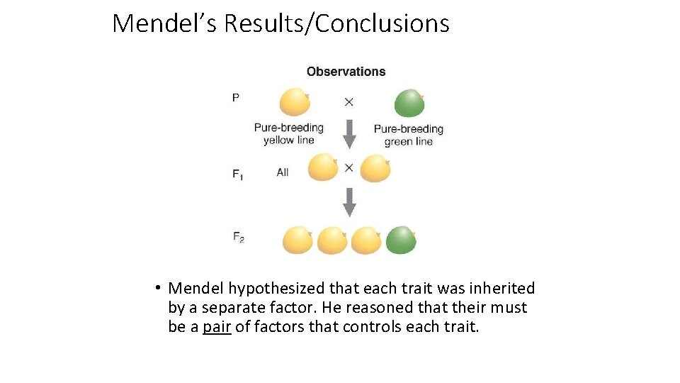 Mendel's Results/Conclusions • Mendel hypothesized that each trait was inherited by a separate factor.